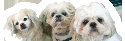 שלושה כלבים חמודים